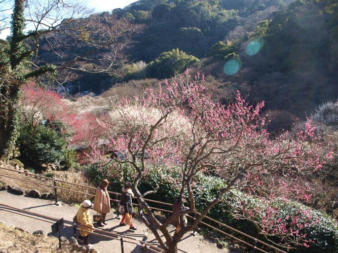 Atami Baien, plum blossoms